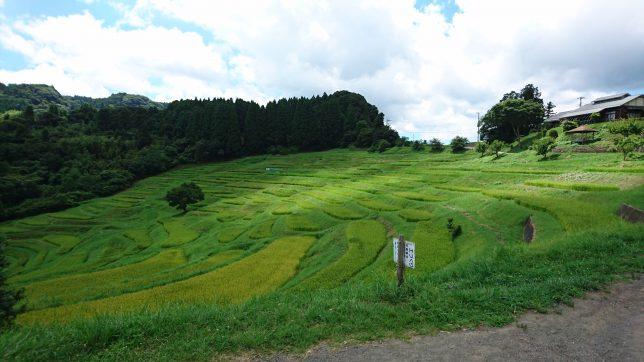 大山千枚田の写真